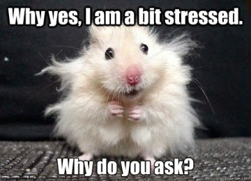 i-am-stressed-mouse